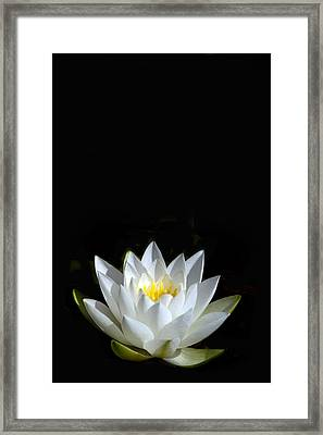 White Star Framed Print by Rebecca Cozart