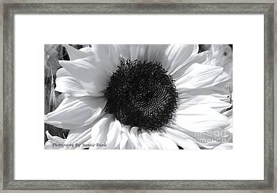 Framed Print featuring the photograph White Sunflower by Jeannie Rhode