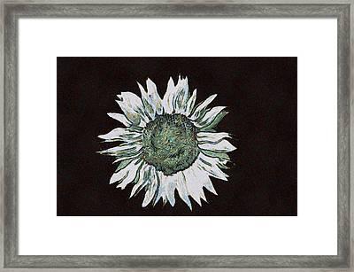 White Sunflower Framed Print
