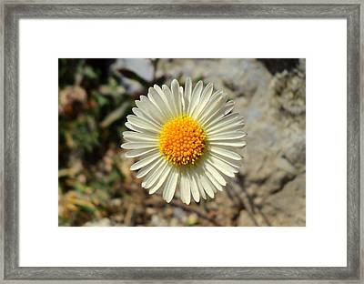 White Wild Flower Framed Print