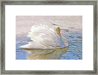 White Swan Framed Print by Elaine Manley