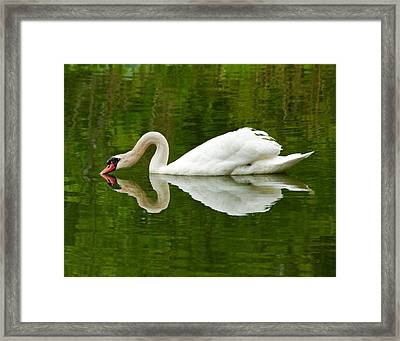 Framed Print featuring the photograph Graceful White Swan Heart  by Jerry Cowart