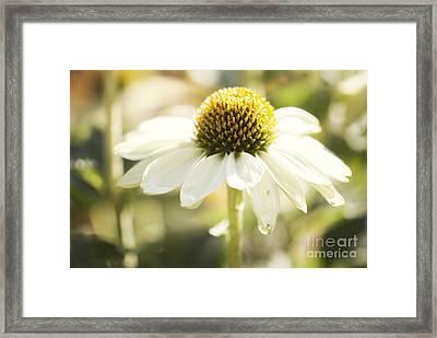 White Swan Framed Print by Juli Scalzi