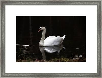 White Swan Lake Framed Print