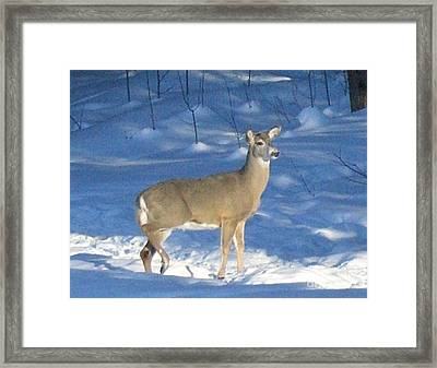Framed Print featuring the photograph White Tail Deer by Brenda Brown