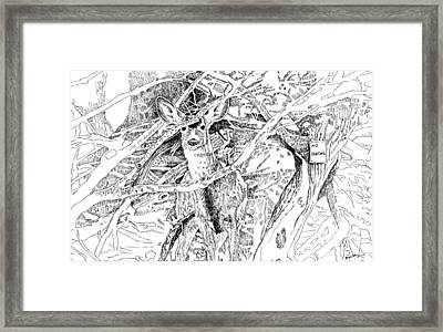 White-tail Encounter Framed Print