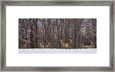 White Tailed Deer Framed Print by Anthony Sacco