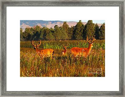 White-tailed Deer Framed Print by Art Wolfe