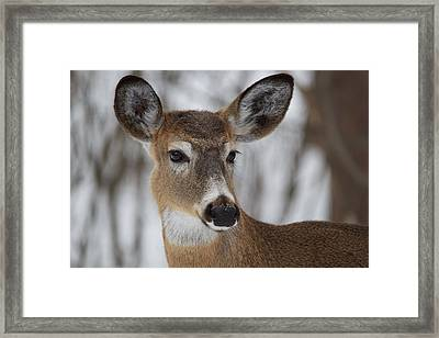 Framed Print featuring the photograph White-tailed Deer At Old Quarry Trail by Nature and Wildlife Photography