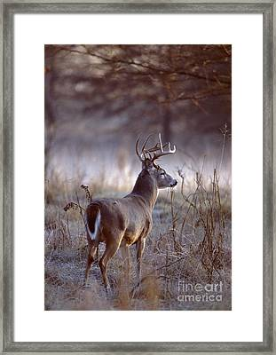 Framed Print featuring the photograph White-tailed Deer Buck by Jack R Brock