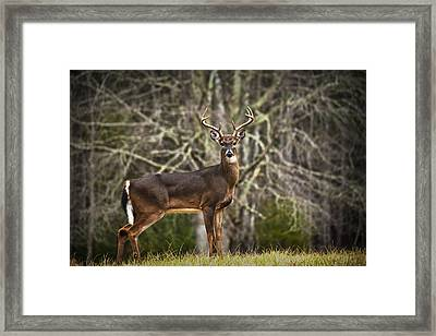 White Tailed Deer Eight Point Buck Framed Print by Randall Nyhof