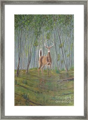 White-tailed Deer - Impressionistic Framed Print by Dana Carroll