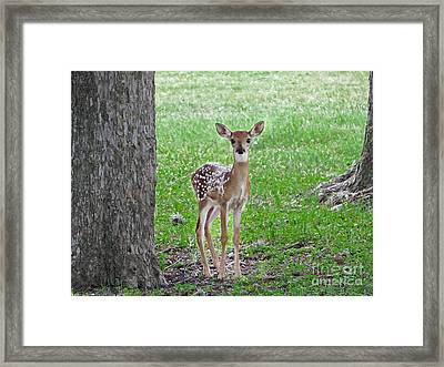 White-tailed Fawn - Face Of Innocence Framed Print