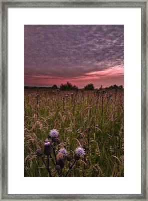 White Thistle Framed Print