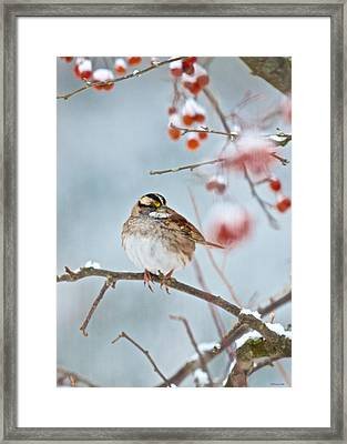 White-throated Sparrow Braving The Snow Framed Print