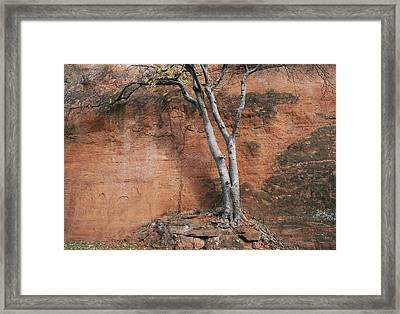 White Tree And Red Rock Face Framed Print