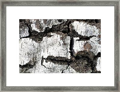 Framed Print featuring the photograph White Tree Bark by Crystal Hoeveler