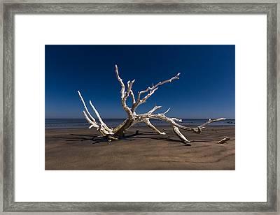 White Tree Framed Print by Debra and Dave Vanderlaan
