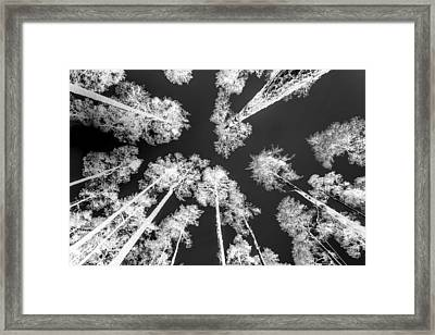 White Trees Framed Print by Hakon Soreide