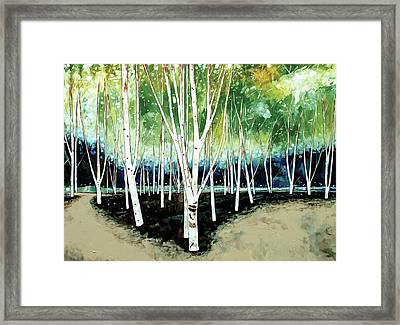 White Trees Framed Print by Stuart Roy