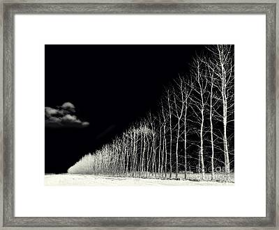 White Trees Framed Print by Stelios Kleanthous