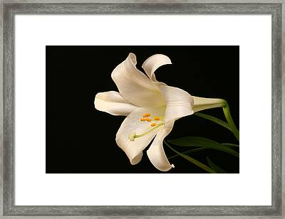 White Trumpet Framed Print by Doug Norkum
