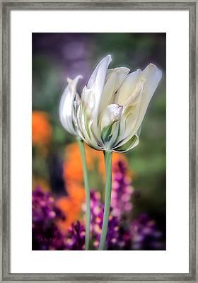 White Tulip Splash Of Color Framed Print
