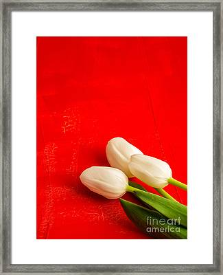 White Tulips Framed Print by Edward Fielding