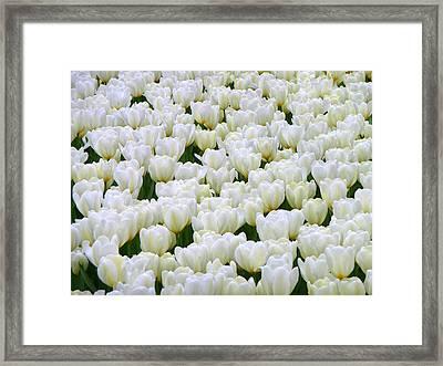 White Tulips Framed Print by F Salem