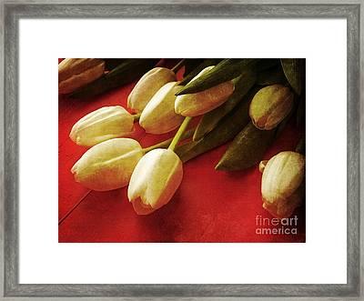 White Tulips Over Red Framed Print