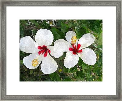 White Twin Hibiscus With Red Veriegation Framed Print by Buzz  Coe
