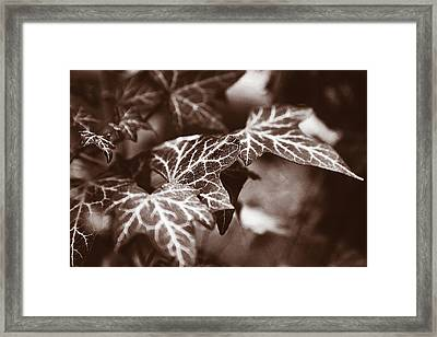 White Veins Framed Print