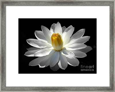 White Water Lily #2 Framed Print by Lisa L Silva