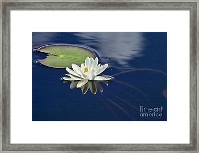 White Water Lily Framed Print by Heiko Koehrer-Wagner