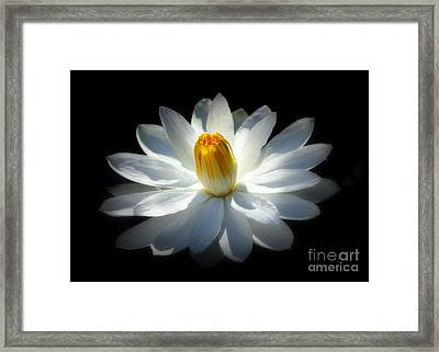 White Water Lily Framed Print by Lisa L Silva