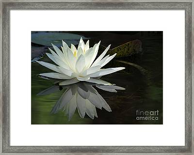 White Water Lily Reflections Framed Print by Sabrina L Ryan