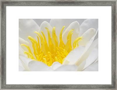 White Waterlily Detail Framed Print