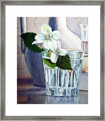 White White Jasmine  Framed Print by Irina Sztukowski