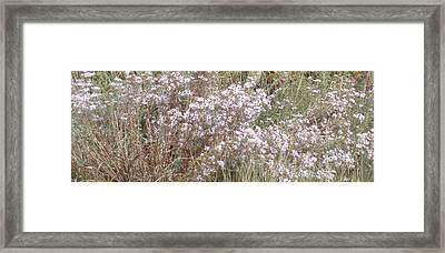Framed Print featuring the photograph White Wild Flowers by Fortunate Findings Shirley Dickerson