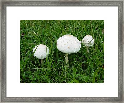 Framed Print featuring the photograph White Wild Mushrooms by Dorothy Maier