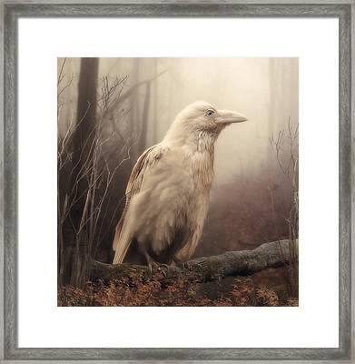 White Wild Raven Framed Print by Cindy Grundsten