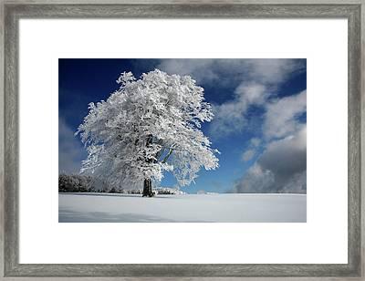 White Windbuche In Black Forest Framed Print