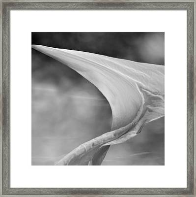 White Wing 1 Framed Print by Laura Fasulo