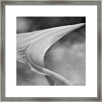 White Wing 2 Framed Print by Laura Fasulo