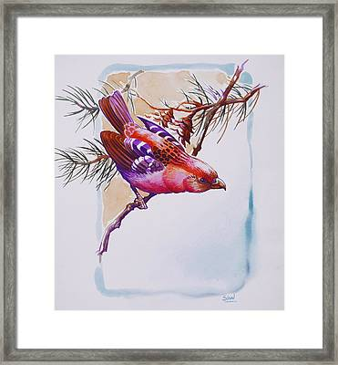 White Winged Crossbill Framed Print by Shivani Verma