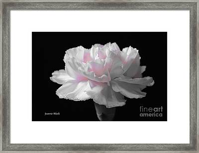 Framed Print featuring the digital art White With Pink Carnation by Jeannie Rhode