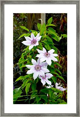 White With Purple Flowers 2 Framed Print