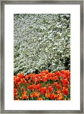 White With Red Framed Print by Gynt