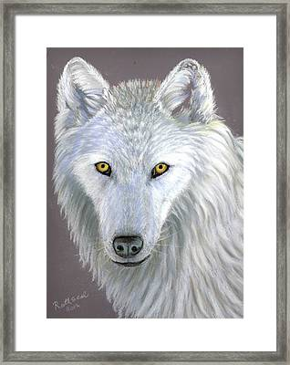 White Wolf Framed Print by Ruth Seal