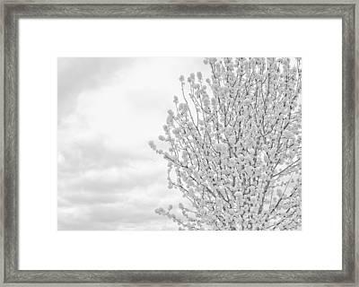 White Wood  Framed Print by DeWaun Lacy